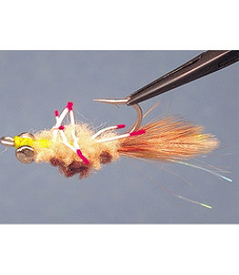 Permit Crab Tan Del Brown 1 Pack