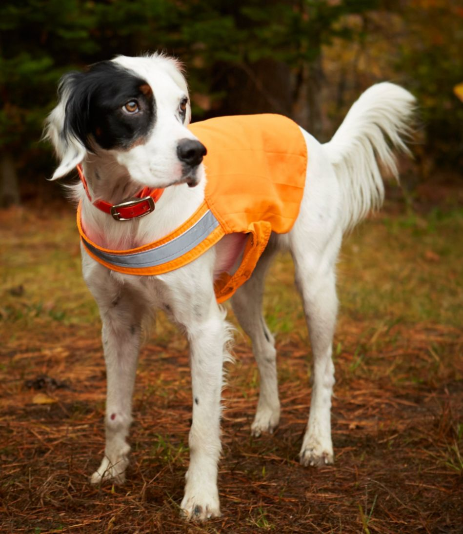 L.L.Bean No Fly Zone Dog Vest