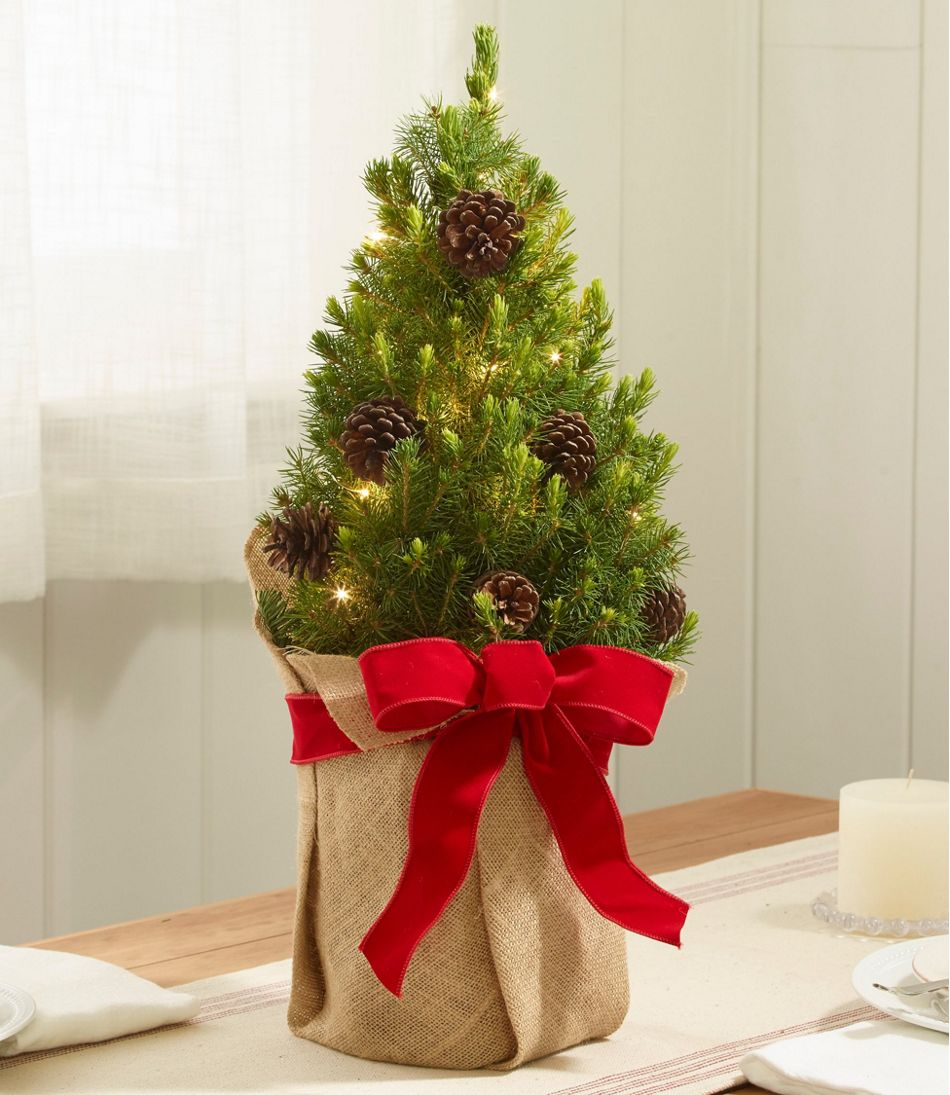 woodland tabletop live christmas tree lighted