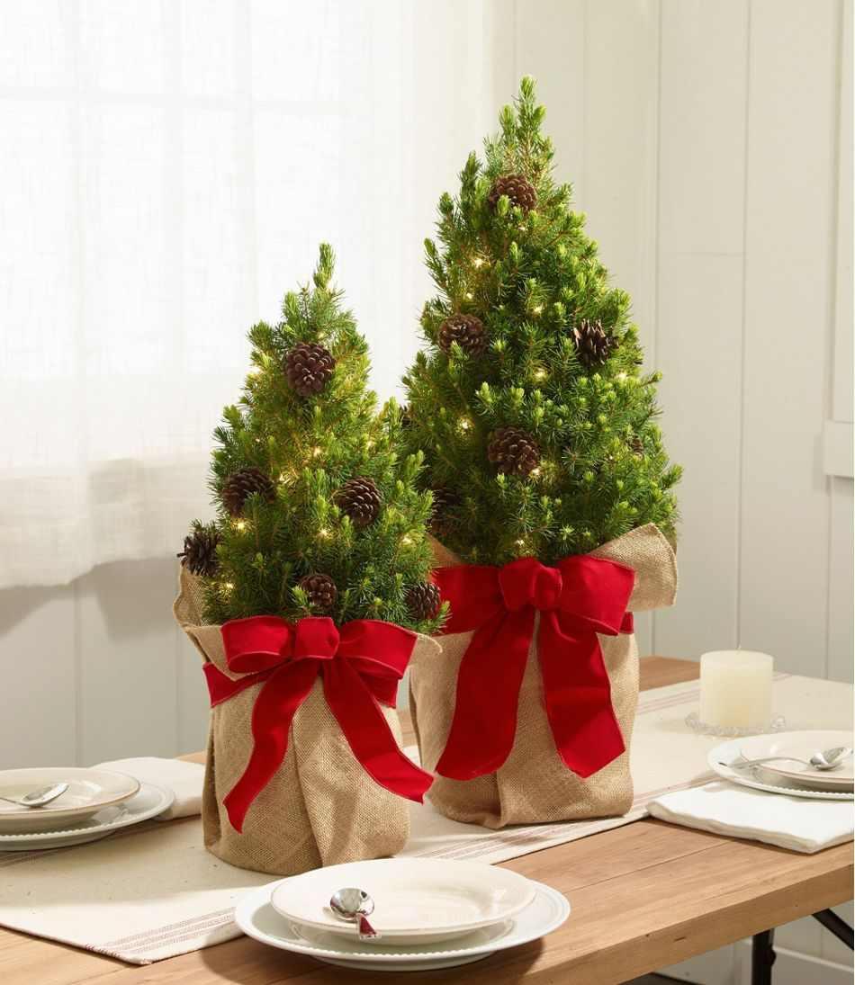 Why Do We Have Christmas Trees For Christmas: Woodland Tabletop Live Christmas Tree, Lighted