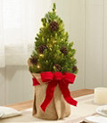 Woodland Tabletop Live Tree with Lights