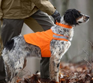 Orange Safety Dog Vest