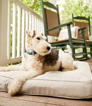 Sunbrella Dog Bed