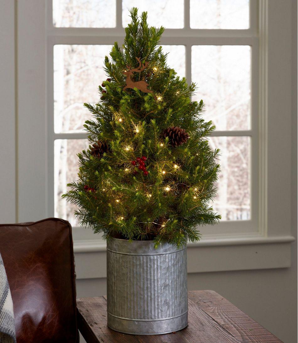 Christmas Reindeer Live Tree With Lights