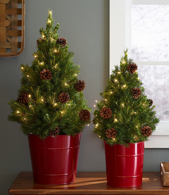 Woodland Tabletop Live Tree with Lights, One Color, large image number 0